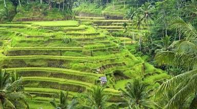 Bali: Circuito para Novios
