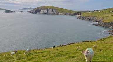 IRLANDA TRADICIONAL - SEMANA SANTA      -                     Galway, Dublín, Cork, Acantilados de Moher                     Athlone, Cashel, Clonmacnois, Limerick