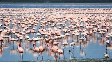KENIA, SAFARI KUVUTIA      -                     Kilimanjaro, Lago Naivasha, Parque Nacional Amboseli, Parque Nacional Lago Nakuru                     Parque Nacional de Aberdare, Parque Nacional del Monte Kenia, Reserva Nacional de Masai Mara, Nairobi
