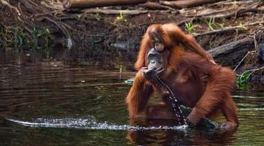 Bali, Nusa Penida, Selva de Borneo y Gilis