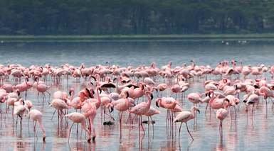 Kenia con 3 Safaris y Visitas en Nairobi