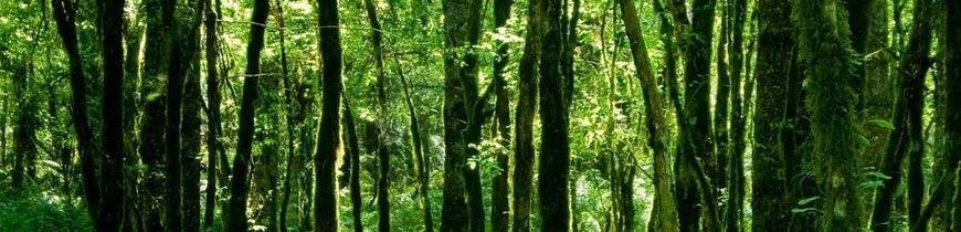 Aventura en la Natural Costa Norte de Brasil