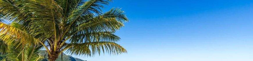 Verano en Punta Cana