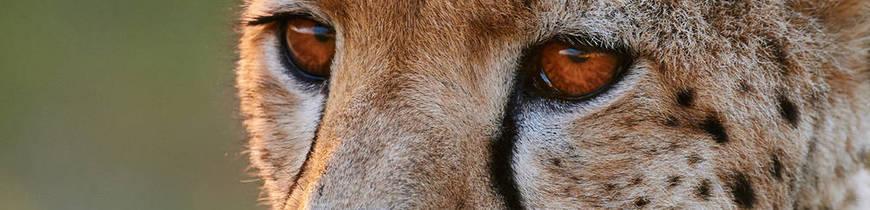 Irán - Safari en Parque Nacional de Khar Turan