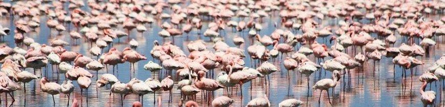 Kenia, Safari Kuvutia