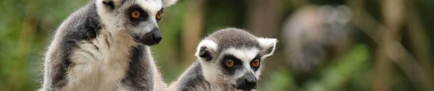 Circuito por Madagascar con Visitas