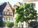 Am Rathaus   Reblaus